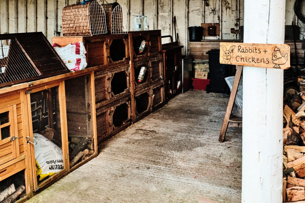 colour photograph of rabbit hutches