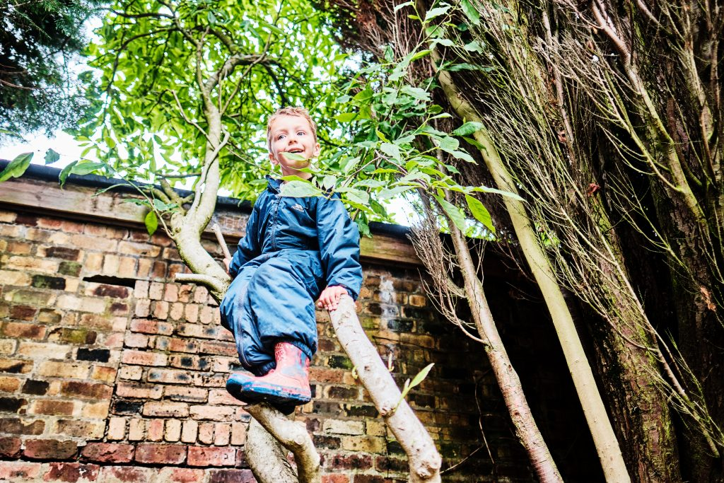 colour photograph of a boy up a tree